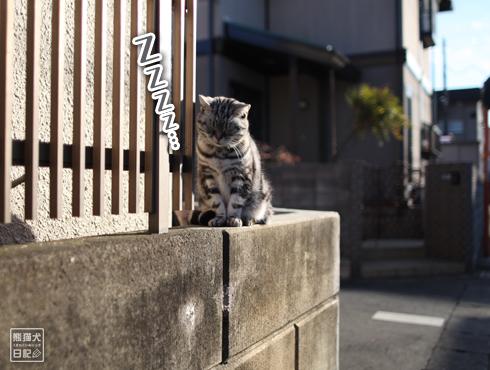 20161215_近所の猫6