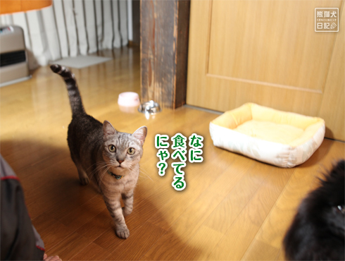 20170116_千葉の両親宅2