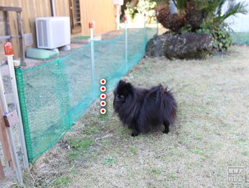 20170118_真熊と志熊3