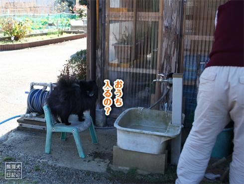 20170118_真熊と志熊2