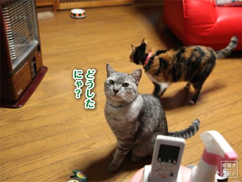 20170127_動物たち5