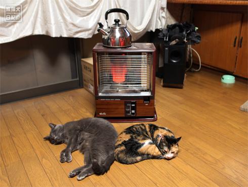 20170202_夫婦猫1