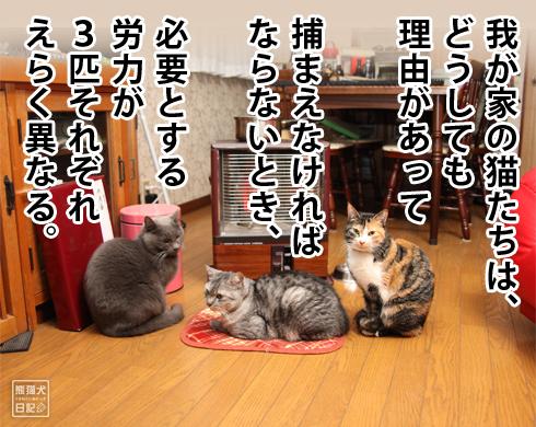20170224_猫マンガ1