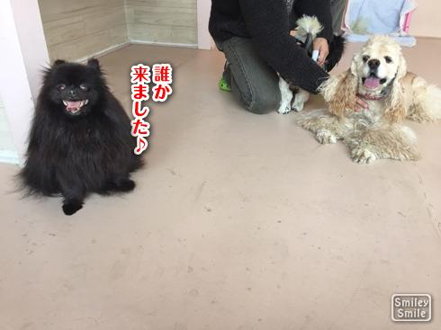 20170307_お泊り2