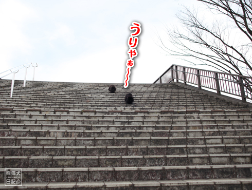 20170308_公園10