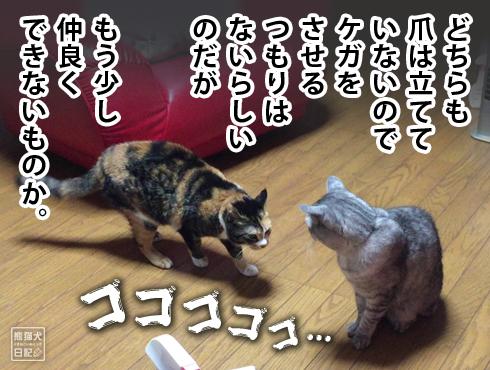 20170317_猫パンチ6
