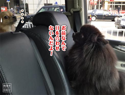 20170321_ダメ犬4