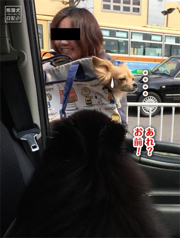 20170321_ダメ犬3
