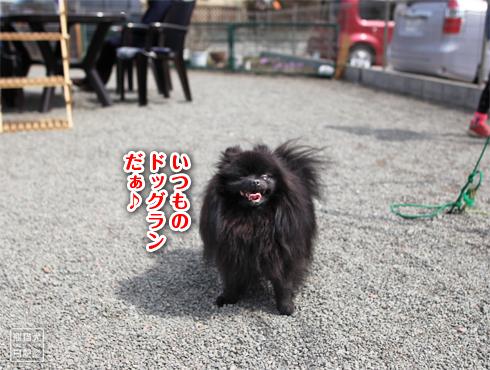 20170321_ダメ犬7