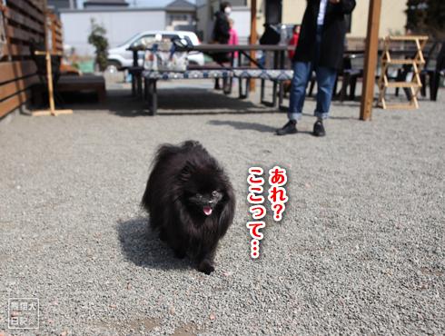 20170321_ダメ犬6
