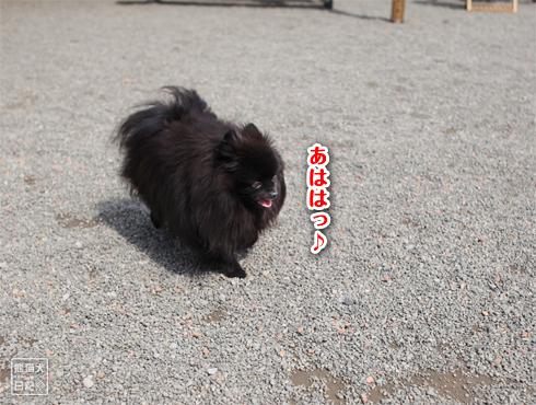 20170321_ダメ犬11