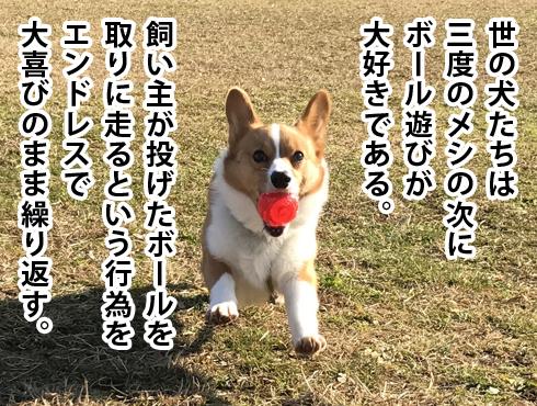 20170329_ボール遊び0