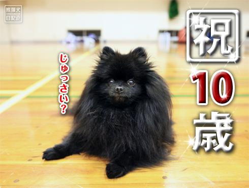 20170402_真熊10歳3