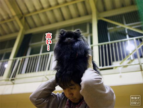 20170402_真熊10歳2