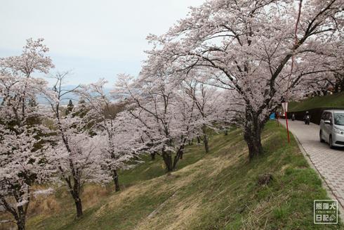 20170419_桜を求めて3