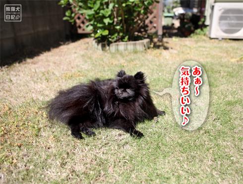 20170506_真熊4