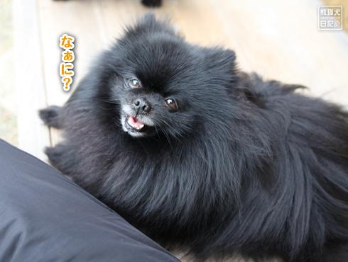 20170526_天真爛漫な志熊7