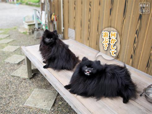 20170526_天真爛漫な志熊3