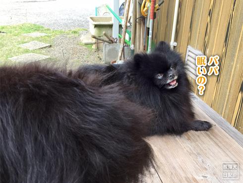 20170529_真熊&志熊3