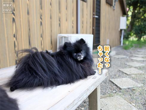 20170529_真熊&志熊4