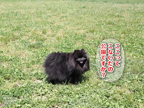20170803_鶴見緑地6