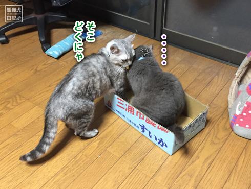 20170809_すいかの箱5