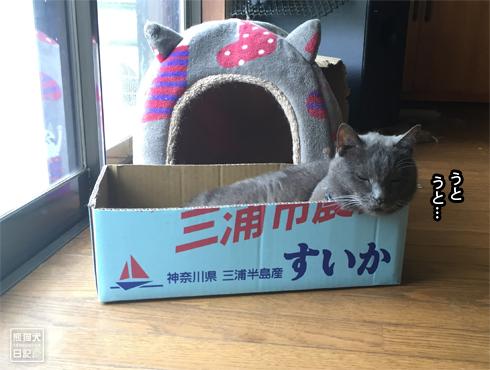 20170809_すいかの箱4