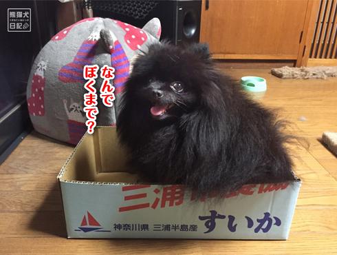 20170809_すいかの箱9