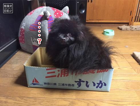 20170809_すいかの箱8