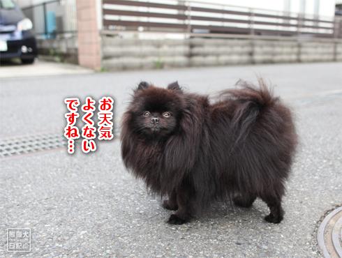 20170814_大葉と真熊6