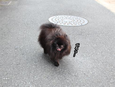 20170909_真熊5