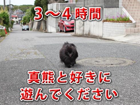 20171005_副賞レポート6