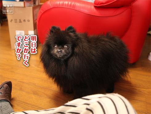 20171021_動物たち4