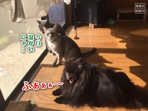 20171111_お婆ちゃん3
