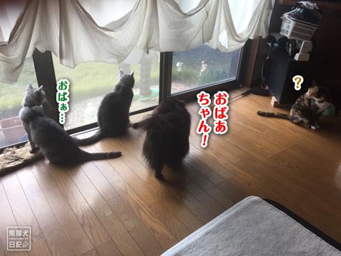 20171111_お婆ちゃん4