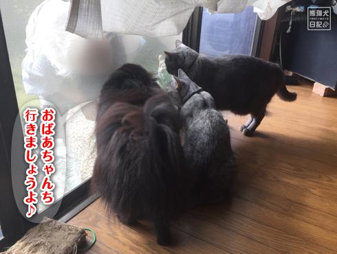 20171111_お婆ちゃん7