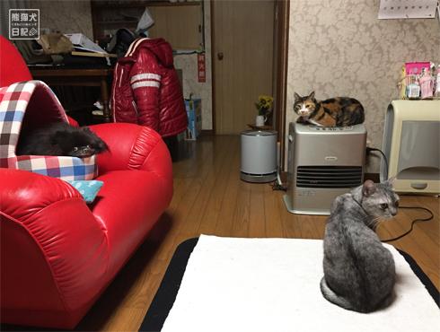 20171123_愛の逃避行1