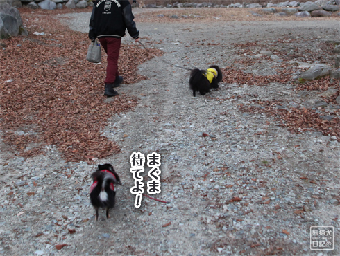 20171230_お散歩10
