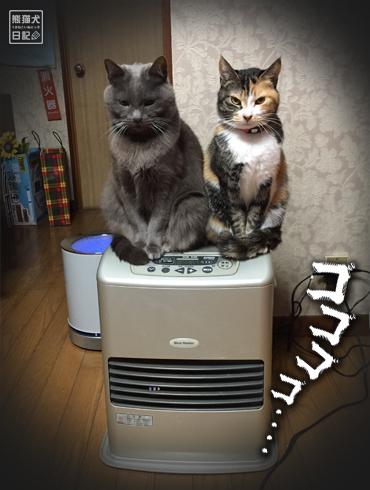 20180221_夫婦猫3