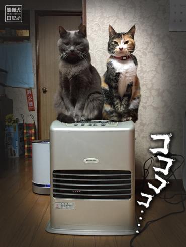 20180221_夫婦猫4