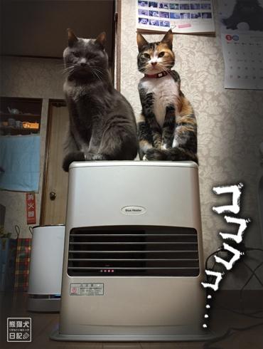 20180221_夫婦猫5