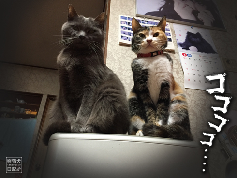 20180221_夫婦猫7