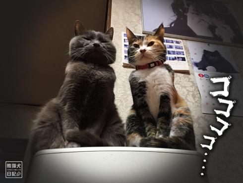 20180221_夫婦猫8