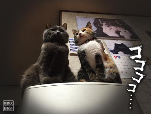 20180221_夫婦猫9