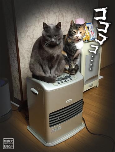 20180221_夫婦猫12
