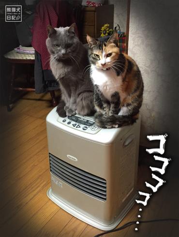 20180221_夫婦猫14