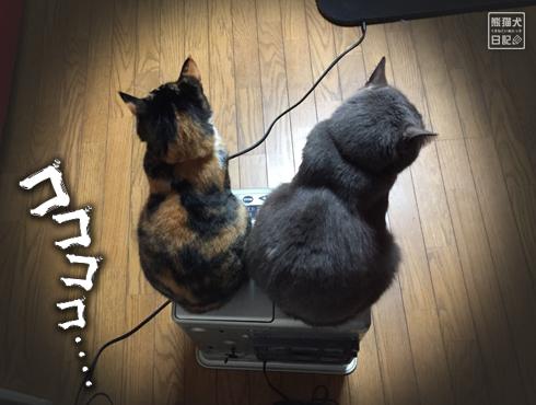 20180221_夫婦猫15