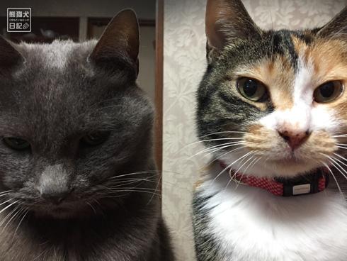 20180221_夫婦猫19