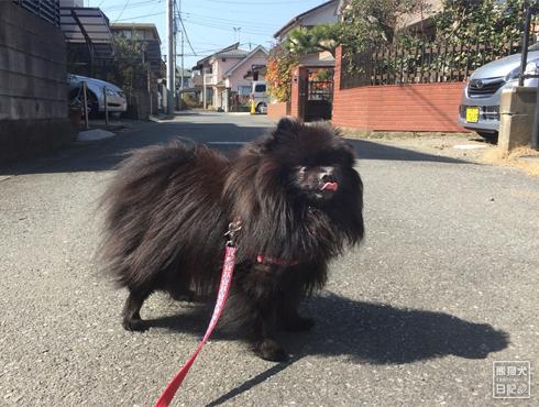 20180315_お散歩1