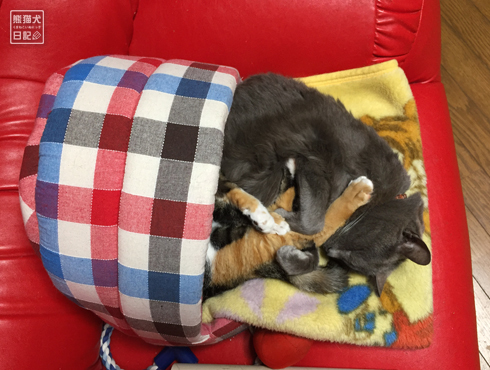 20180323_夫婦猫7